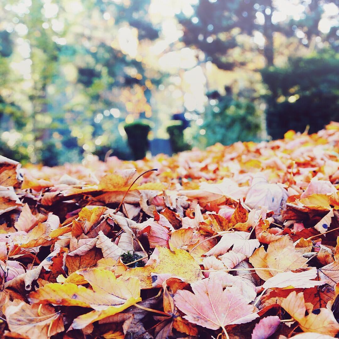 Oben noch grn unten schon bunt Der Herbst ist dahellip