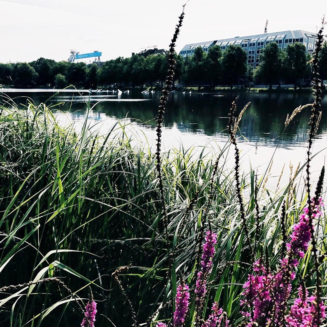 Sommer in Kiel Mal sehen wie lange er diesmal hlthellip