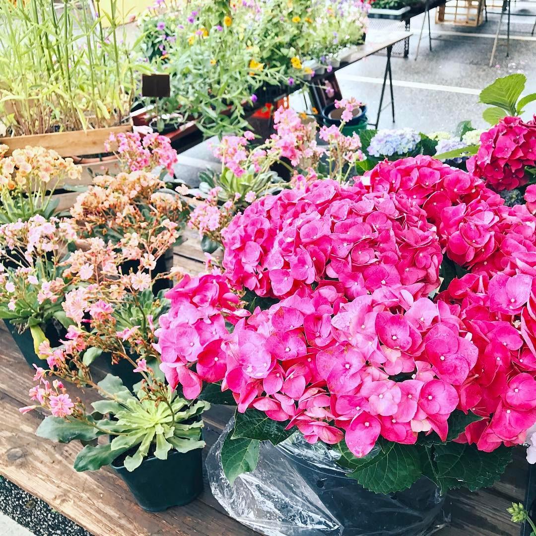Blumenpracht auf dem Wochenmarkt flowers weekendflowers wochenendeinkufe blumen hortensien kielhellip